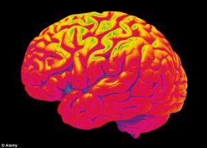 Semana - 1309 - 3 Cerebro
