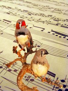 Semana - 1311 - 1 BirdsWithMusic
