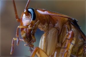 Semana - 1322 - 2 Cucaracha