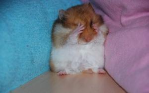 Semana - 1331 - 3 Frightened hamster