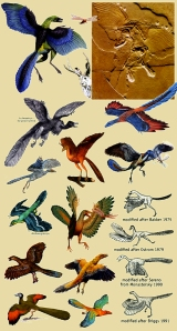 Semana - 1337 - 1 Archeopteryx
