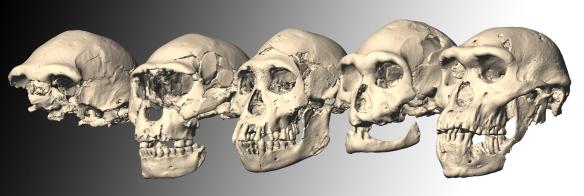 Dmanisi skulls 1 - 5