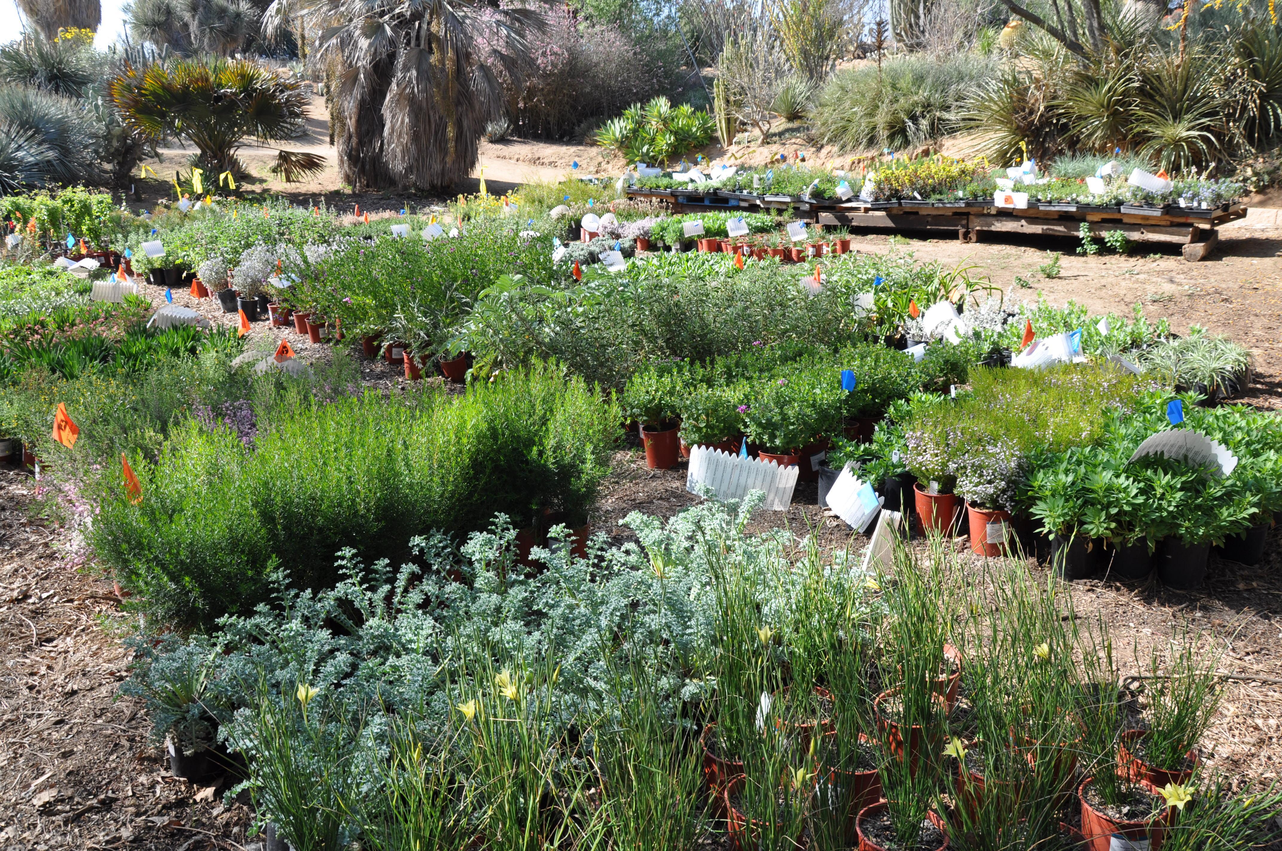 Conocimientos tradicionales jardines bot nicos dcc uaem for Plantas de un jardin botanico