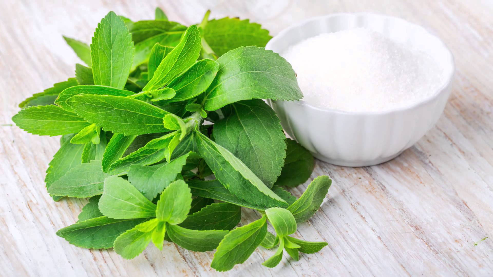 Resultado de imagen de stevia